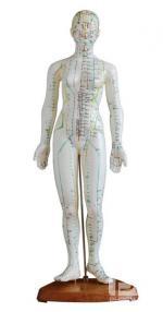 人体针灸模型 48CM