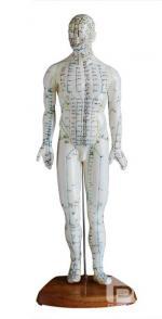 人体针灸模型 46CM
