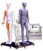 人体针灸穴位发光模型(键控)