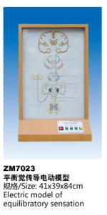 平衡觉传导电模型