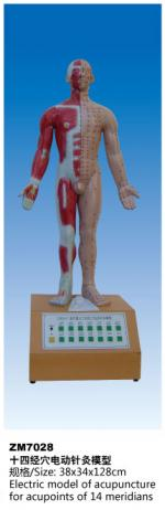 十四经穴电动针灸模型