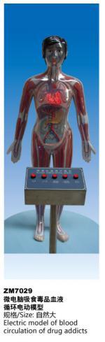 微电脑吸食毒品血液循环电动模型